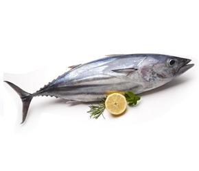 Fresh Tuna Fish Ahmedabad